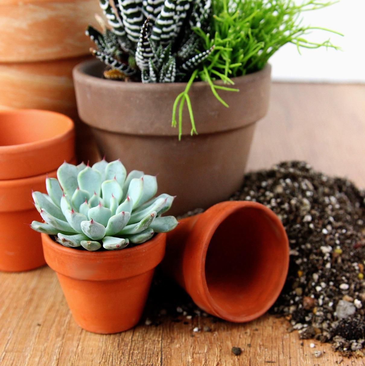 Przesadzanie Kaktusów I Sukulentów