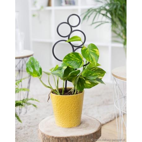 Drabinka do roślin pnących- bąbelek rozm. M