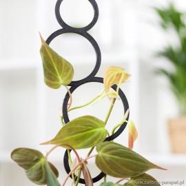 Podpora do roślin pnących, BĄBELKI rozmiar S -czarna 1.3