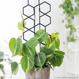 Drabinka do roślin pnących- sześciokąt rozm. L