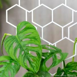 Podpora do roślin pnących, PLASTER MIODU w kształcie serca- biała 2.4