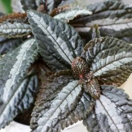 Osłonka kulista -kremowa 06.001.15 -12 cm