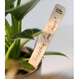 Tabliczka bambusowa do oznaczania roślin zestaw 6 szt GT58