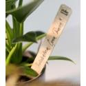 Tabliczka bambusowa do oznaczania roślin zestaw 6 szt.