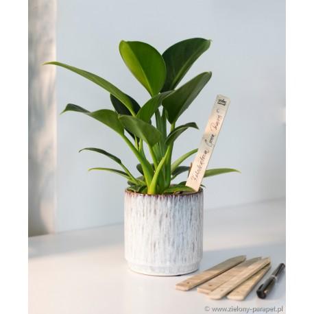 Tabliczka bambusowa do oznaczania roślin zestaw 6 szt