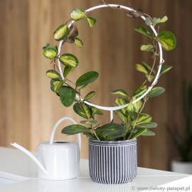 Podpora do roślin pnących, RING - biała
