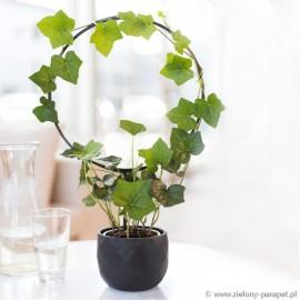 Podpora do roślin pnących, RING - czarna