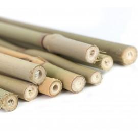 Tyczki bambusowe ZESTAW, podpora do roślin pnących