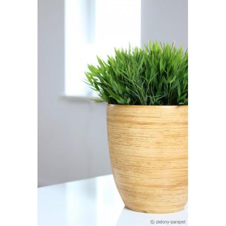 Bambus pokojowy 'Monica' Pogonatherum paniceum