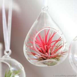 Gruszka szklana mała -śr. 8 cm