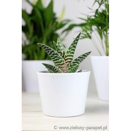Doniczka -osłonka ceramiczna 11 cm