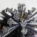 Kalanchoe tubiflora Żyworódka wąskolistna