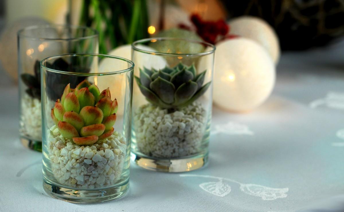 Sukulenty -prezent dla gości weselnych