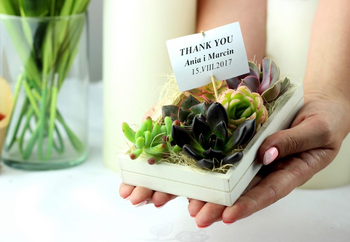 sukulenty-prezent dla gości weselnych