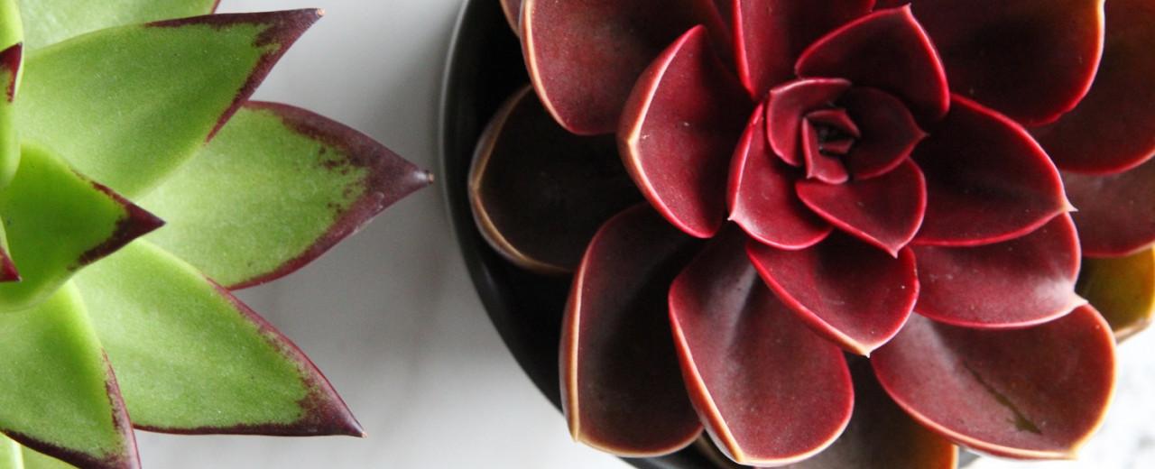 Kwiaty Doniczkowe 5 Gatunkow Najlatwiejszych W Uprawie
