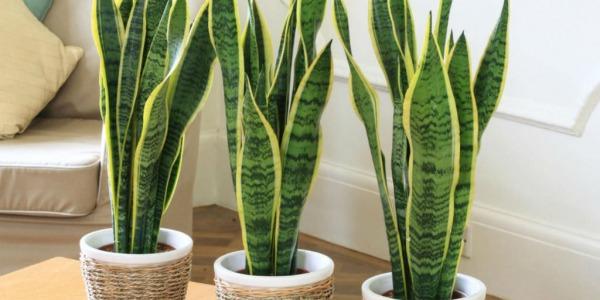 Kwiaty Egzotyczne Doniczkowe Rośliny Egzotyczne Do Domu Zielony